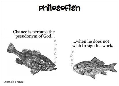 philosofish 16 small