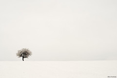Winter tree (Nick-K (Nikos Koutoulas)) Tags: winter snow tree nikon nikos minimal greece minimalism f28 3570mm   kozani krokos   d700    gvr1 koutoulas