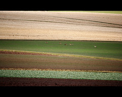 Agricultural Desert? (Frank Wuestefeld) Tags: canon germany painting landscape deutschland eos rebel farm landwirtschaft deer explore lena creativecommons tele farms abstraction agriculture patchwork landschaft raps reh deers m7 agrar rehe gerste weizen gemlde hafer agrikultur 400d 55250is frankwuestefeld germanyseries