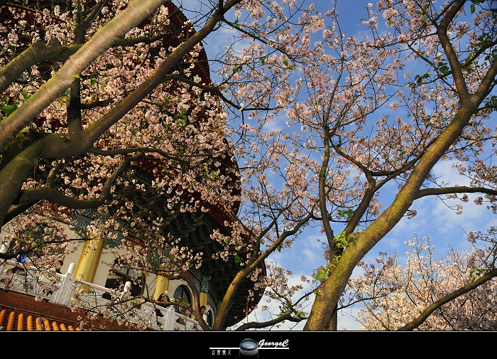 Sakura sunny 22