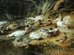 Wallace Collection, London (Sheepdog Rex) Tags: birds geese paintings ducks wallacecollection