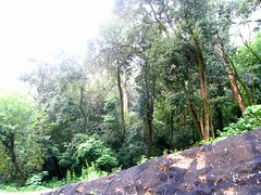 RIMG6180x1000 (Weltbummler) Tags: yerbabuena tucumn bosquenublado nuboselva