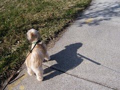 On A Walk (k8southern) Tags: chewie