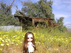Little girl in the prairie