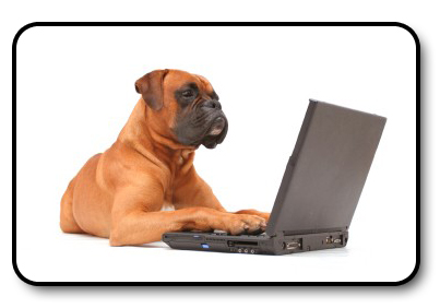 Boxer on a Laptop