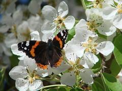Primavera Anticipada (pili_stage) Tags: naturethroughthelens