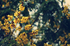 And Spring arose... (VinothChandar) Tags: park morning flowers summer india flower colour macro tree green love nature colors beautiful yellow canon garden photography