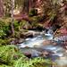 Mellow Creek
