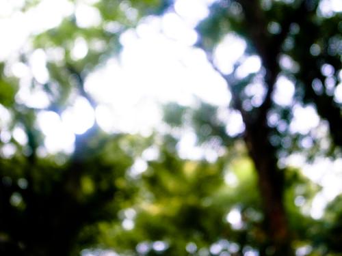 婆娑的树影