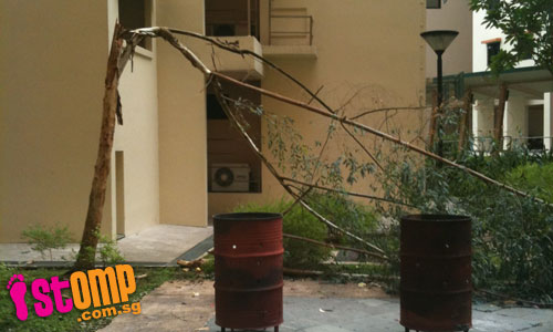 Lightning strikes close to HDB block causing tree to fall