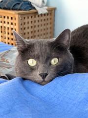 Zack (gazmanjones) Tags: birthday cute cat baker penny 30th zack