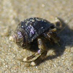 MiniHermitCrab