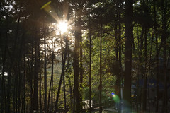 Bamboo Sunset (IceNineJon) Tags: china travel trees sunset sky plants plant tree photography asia chinese bamboo prc  moganshan zhejiang peoplesrepublicofchina   canon40d deqingcounty moganshannationalpark mountmogan 169kmswofshanghai