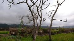 aguacateros secos P1270438 marzo2009