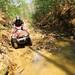 Bluegrass_ATV FONZ4621