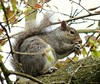 Thanks For The Monkey Nuts. (Church Mouse 07) Tags: uk favorite tree nature animal lumix spring wildlife may panasonic british 2010 greysquirrel atthepark dmcfz28 churchmouse07