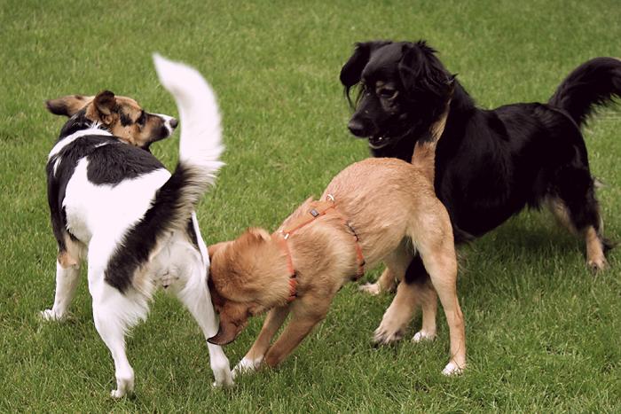 20100515 hundetriovintage02
