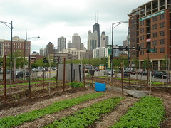 04-City-Farm-Chicago-IL (Piush Dahal) Tags: urban chicago green farm vegetable fresh produce organic recycle