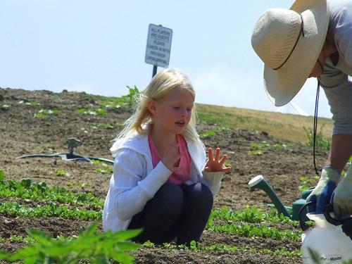 Organic Farm 051