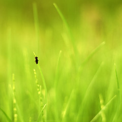 Living in a green World (~ Maria ~) Tags: green grass bug bokeh simplicity spring2010