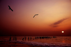 Catch me if You Can....Calicut Beach (aroon_kalandy) Tags: light sunset sky orange india beach nature beauty birds creativity adobephotoshop artistic awesome kerala fantasy chase greatshot impressions concept majestic naturelovers calicut newvision sigma18200 beautifulshot anawesomeshot sonydslra200 malayalikkoottam thesuperbmasterpiece aroonkalandy peregrino27newvision