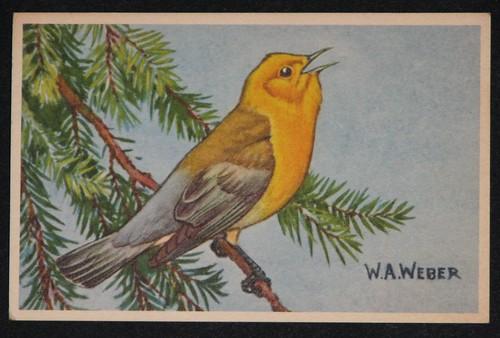 vintage birds 004