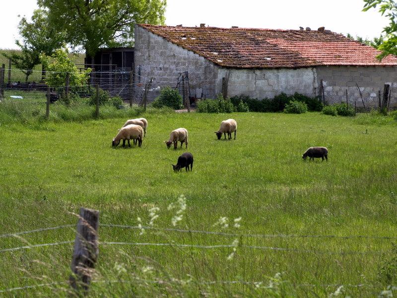 http://farm5.static.flickr.com/4047/4636210231_9f18825fec_o.jpg