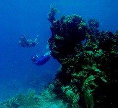 Snorkeling in Utila is a great way to see the reefs!