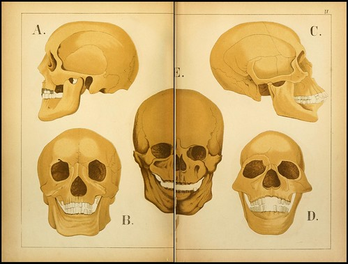 An atlas of Anatomy (FF Miller, 1879) k
