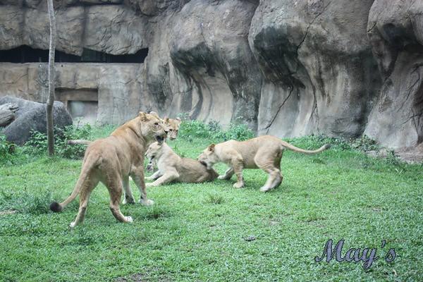 990522台北動物園 155
