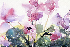 Cyclamen: Watercolour & Brush (skyeshell) Tags: flowers colour painting houseplant watercolour cyclamen wetonwet expressivepainting freebrushwork watercolourbrush porplant paintingfromdirectobservation softedgepainting
