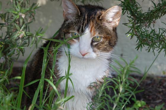 inthegrass-closeup.jpg