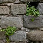 Roman Ruins in Fiesole thumbnail