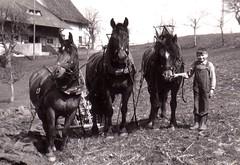 1957 Martin beim pflgen (Werner_Schmutz) Tags: horses plow pferde plough pflug pflgen 3spnnig