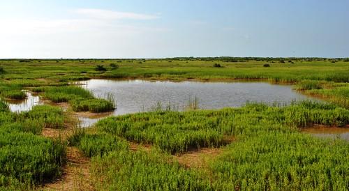 Aransas First Cove Harbor Wetlands Sanctuary
