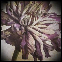 Twist (Y.H.P) Tags: flowers flower deep  imageourtime