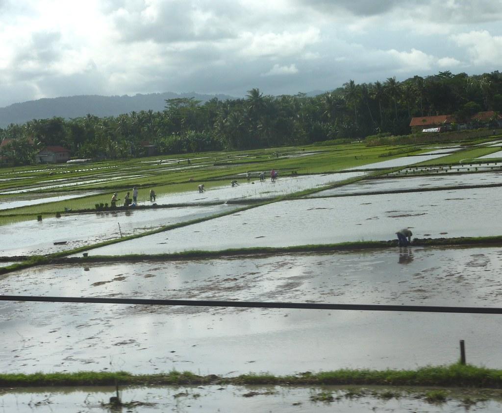 Java-Bandung-Yogyakarta (31)