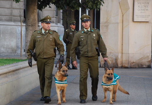 pacos y sus perros/cops and dogs