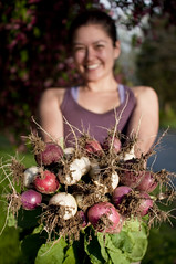 radish bouquet (Diana Pappas) Tags: marina spring radishes gardening farming bouquet farmer organic biodynamic localfood eastereggradishes seasonalproduce