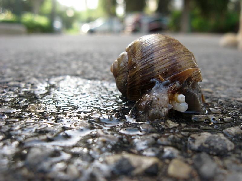 13-10-2010-poor-poor-snail2