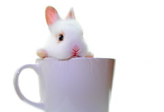 Day Dreamin' ( Spice (^_^)) Tags: autumn pet baby white macro cute rabbit bunny cup colors animal japan canon mouth geotagged nose eos interesting eyes kitten asia hand wordpress small ears blogger september whiskers livejournal mug