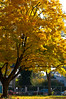 Herbst in Offenbach