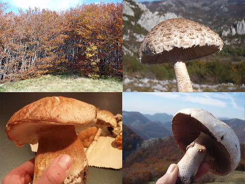 Velebit mountain mushrooms