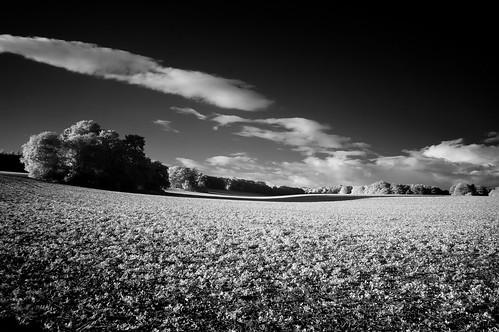 The Rolling Hills of Hursley [IR]