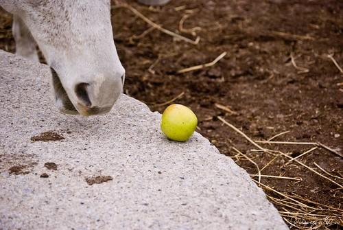 apple getaway