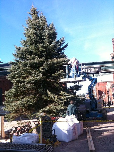 Holiday tree gets unwrapped in preparation for the Distillery District Christmas Market
