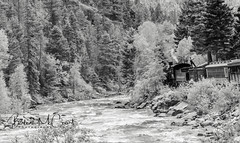 Durango-Silverton Colorado Train (Barb McCourt) Tags: waterstop train colorado southwest duranogosilverton steamlocomotive coal historic scenic animasriver people trees rocks blackandwhitephotography blackandwhite bnw bw scenery