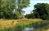 The Cows come home (Heaven`s Gate (John)) Tags: charlecote house gardens field gree grass trees landscape river avon england johndalkin heavensgatejohn brown cows church tower reflection 25faves
