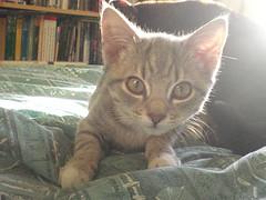 Ready to pounce..? (cox-on-the-box - art, clay, cats, veg) Tags: catnipaddicts