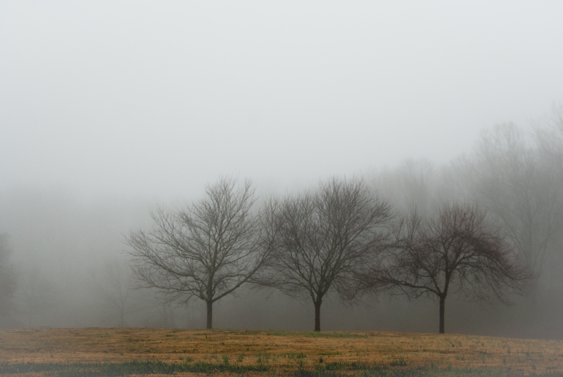 Day 66: Trees in the Fog